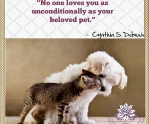 dogs, fur, and unconditional image
