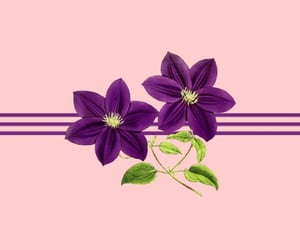 flower, pink, and purple image