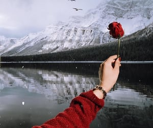 outdoor, red, and rose image