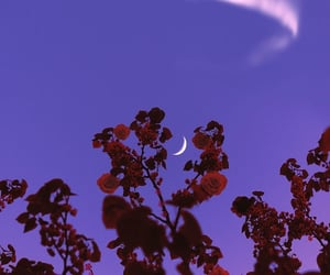 moon, nature, and purple image