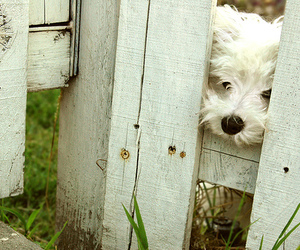 dog, fence, and cute image