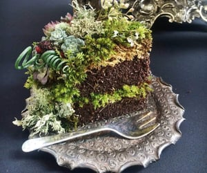 plants, cake, and flowers image