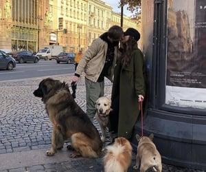 dog, couple, and animal image