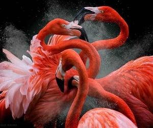 bird, animal, and flamingo image