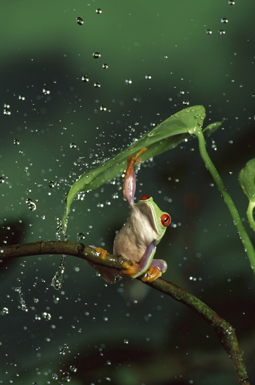 frog, animal, and green image