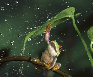 frog, green, and rain image