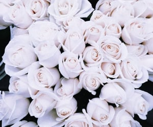 roses, white, and flowers image