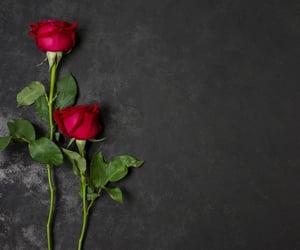 flores, rosas rojas, and rosas image