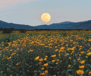 flowers, moon, and yellow image