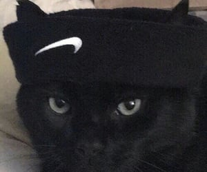 cat and nike image