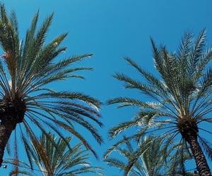 tree, california, and sky image