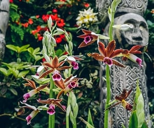 orchid, singapore, and gardens by the bay image