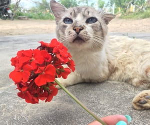 aesthetic, nature, and pets image