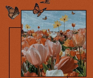 butterfly, december, and flowers image