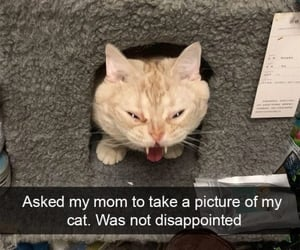 cat, snapchat, and derp image