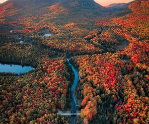 autumn, Maine, and forest image