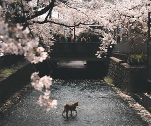 cat, cherry, and flowers image