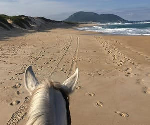 beach, horse, and brazil image