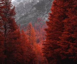 nature, red, and street image