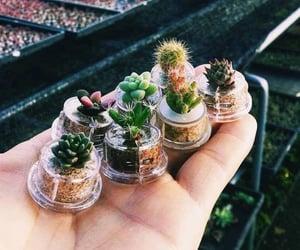 cactus, mini, and plants image