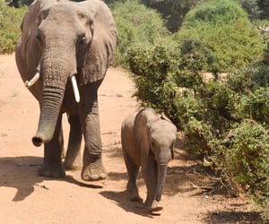 elephant, elephants, and mother and son image