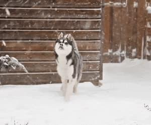 christmas, cold, and dog image