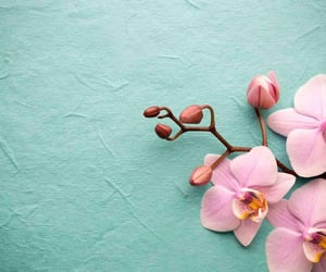 light blue, orchid, and pastel image