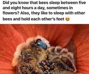 precious creatures, sleeping bees, and bee's feet image