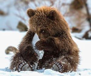 animal and bear image