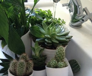 article, cactus, and garden image