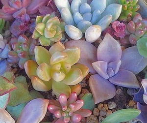 aesthetic, flowers, and plants image