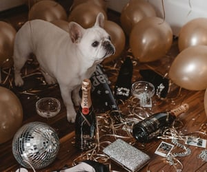 dog and new year image