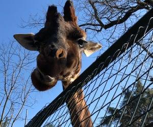 free, zoo, and love image