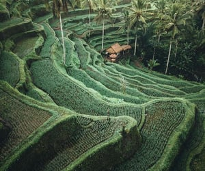 travel, bali, and nature image