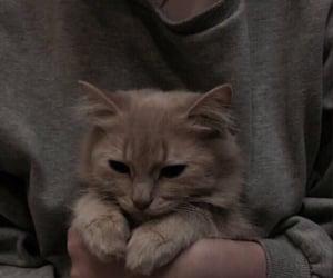 anything, camera, and cats image