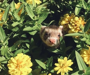animal, ferret, and flowers image