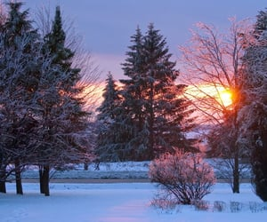 cold, snow, and nature image