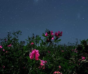 flowers, night, and photography image