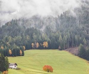 black, fog, and trees image