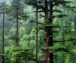 tree, nature, and forest image