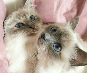 aesthetic, cats, and cute image