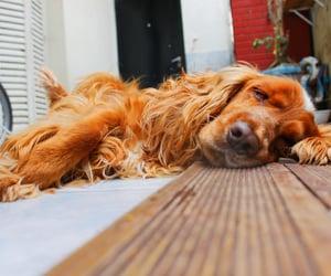 dog, perro, and dormido image
