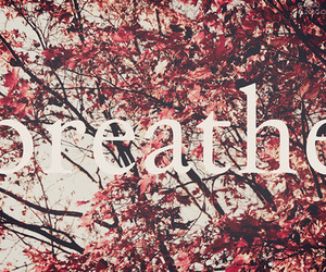 breathe, quote, and tree image