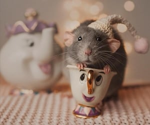 funny, mouse, and pet image