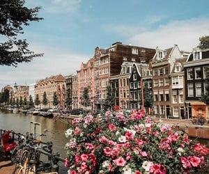 amsterdam, flowers, and landscape image