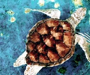 mar, playa, and tortugas image