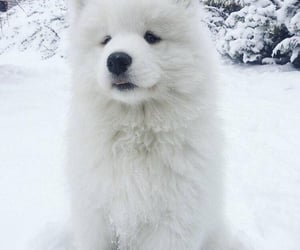 dog, cute, and pet image