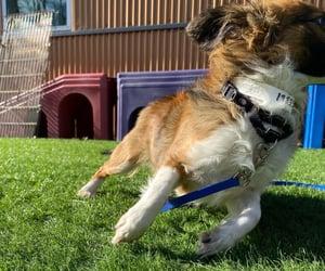 adopt, baby, and dog image