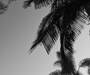 b&w and palm trees image