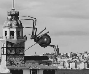 art, istanbul, and spider image